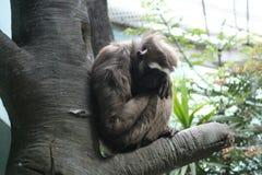 La scimmia si siede sull'albero immagini stock