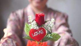 La señora asiática con sonrisa le da una maceta de la rosa roja para el amor uno Slowmo