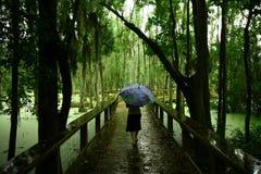 La señora en el pantano Fotos de archivo libres de regalías