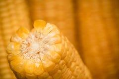 La section transversale d'épi de maïs est étroite photographie stock libre de droits