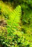 La selva con el helecho sale del fondo verde de la naturaleza Foto de archivo