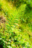 La selva con el helecho sale del fondo verde de la naturaleza Fotos de archivo