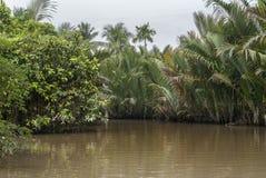 La selva crece demasiado los canales del delta del Mekong, Vietnam. Imagen de archivo libre de regalías