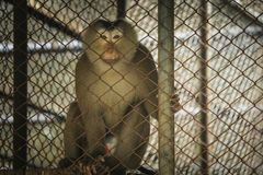 La selva del mono se atrapa en una jaula Foto de archivo