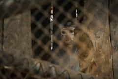La selva del mono se atrapa en una jaula Fotos de archivo