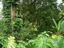 La selva enorme le gusta la isla grande Hawaii de la vegetación Fotografía de archivo