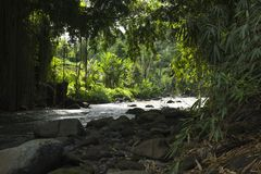 La selva hojea a lo largo del río en Ubud, Bali, Indonesia Fotos de archivo libres de regalías