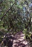 La selva tropical asombrosa en el La Gomera, Foto de archivo