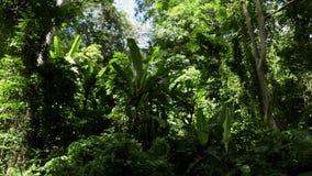 La selva tropical tropical bajo luz del sol en sonó la colina almacen de metraje de vídeo