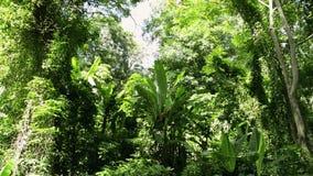 La selva tropical tropical bajo luz del sol en sonó la colina metrajes