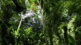 La selva tropical tropical bajo luz del sol en sonó la colina almacen de video