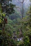 La selva tropical tropical en Asia sudoriental foto de archivo