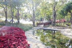 La selva tropical tropical en el parque yuanboyuan, adobe rgb fotografía de archivo