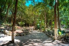 La selva tropical en un d?a soleado brillante imagen de archivo libre de regalías