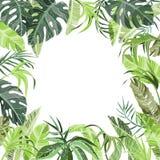 La selva tropical planta el fondo stock de ilustración