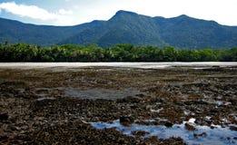 La selva tropical resuelve el océano Fotografía de archivo libre de regalías