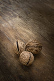 La semilla de los oddloam secos de Cerbera Imagen de archivo
