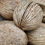 La semilla secada del pong del pong (othalanga, árbol del suicidio) Foto de archivo libre de regalías