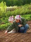 La semina insieme Fotografia Stock Libera da Diritti