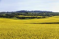La senape sistema l'Idaho del sud 2 Fotografie Stock Libere da Diritti