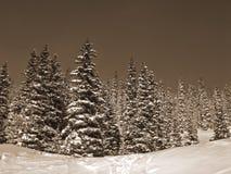 La seppia ha modificato la neve la tonalità sugli alberi Immagine Stock