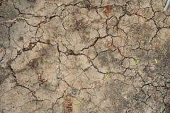 La sequedad de la sequía agrietó la tierra con las pequeñas hojas fotos de archivo