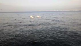 La sera sta venendo sul mare a Smirne Turchia video d archivio