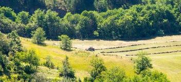 La Serbia: prati della montagna Fotografie Stock