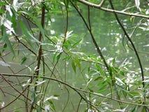 La serenidad del bosque foto de archivo libre de regalías