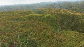 La serie ? una vista della foresta e della giungla di Bali Il volo del fuco sopra il baldacchino degli alberi in nuvoloso archivi video