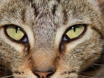 La seriedad de mi animal doméstico Imágenes de archivo libres de regalías
