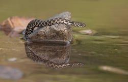 La serpiente Imagenes de archivo