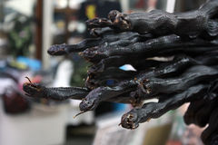 La serpiente coralina negra deseca Fotografía de archivo