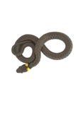 La serpiente de hierba va 8 Fotos de archivo