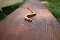 La serpiente en la madera de la textura Foto de archivo
