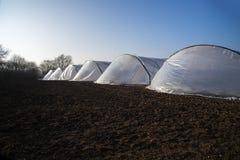 La serre chaude perce un tunnel du plastique de polythène dans une rangée sur un agricul Images libres de droits