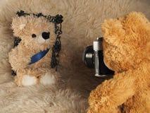 La sesión fotográfica del oso imagen de archivo libre de regalías