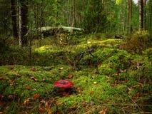 La seta del Russula con un sombrero rojo crece Fotografía de archivo