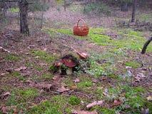 La seta en el bosque Fotografía de archivo libre de regalías