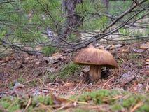 La seta en el bosque Foto de archivo libre de regalías