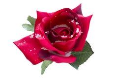 La seta rossa è aumentato in neve Fotografie Stock Libere da Diritti