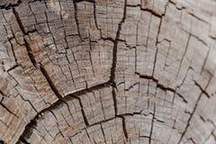 La sezione interna di un albero fotografia stock