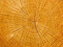 La sezione trasversale di una quercia Fotografia Stock