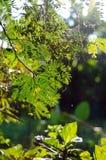 La sfuocatura di luce solare del bokeh di verde della natura lascia il fondo immagine stock