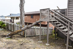 La siccità induce il pino morto del vaso a cadere sulla casa Fotografie Stock Libere da Diritti