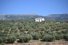 La sierra parco naturale di Subbetica in Andalusia, via la La Subbetica di Verde a Cabra, Cordova, Andalusia, Spagna immagini stock