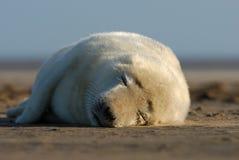 La siesta perfecta Fotografía de archivo