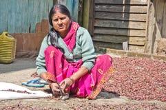 La signora indiana in vestito dai sari sbuccia l'erba indiana immagine stock