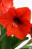 La signora nel colore rosso immagine stock libera da diritti