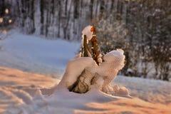 La silhouette animale de Milou se repose dans la neige blanche avec l'éclairage chaud d'or Photos stock